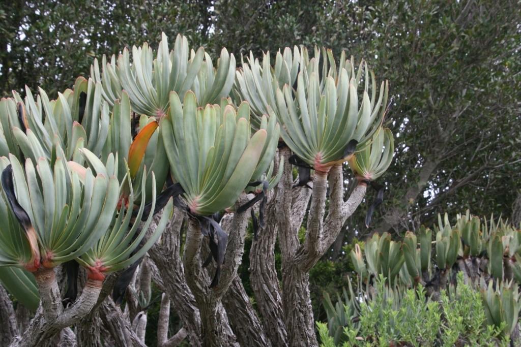 Botanischer Graten von Bettys Bay