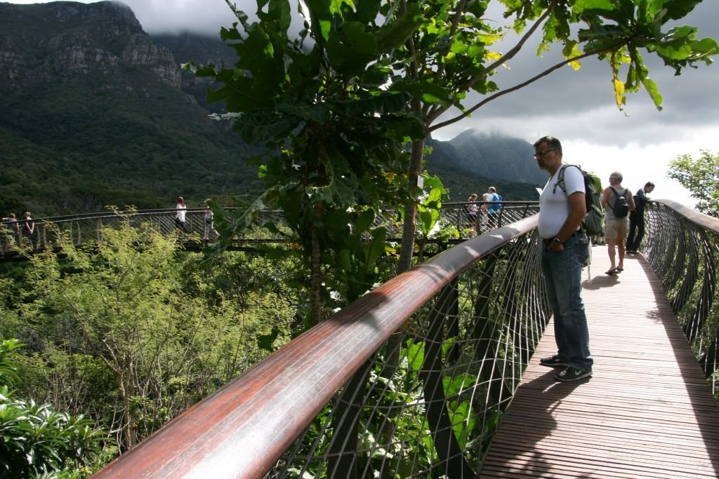 2 Boomslang in Kirstenbosch